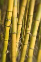 Close-Up Of Bamboo Stalks