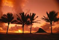 Hawaii, Oahu, Sunrise At Chinaman's Hat, Palms Si