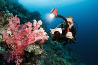 Indonesia, Diver taking a picture of soft coral on