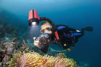 Indonesia, Wakatobi, Diver taking a picture of ane