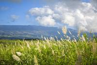Grasses In A Peaceful Pasture, Hawaii