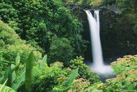 Hawaii, Big Island, Hilo, Wailuku River State Park