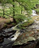 Stream In The Woods, Kilbride, County Antrim, Irel