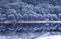 Winter Lake With Hoar Frost, Glendalough National