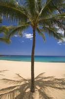 Hawaii, Lanai, Hulopoe Beach, Palm Tree Centered W