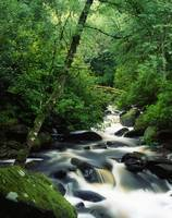 Owengarriff River, Killarney National Park, County