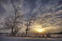 Snow Covered Trees Silhouetted By Sunrise On The A