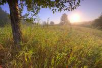 Sunrise On A Dew Covered Grassy Hill, North Of Edm