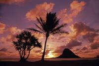 Hawaii, Oahu, Kualoa County Beach Park, Mokoli'i