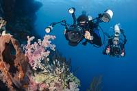 Indonesia, Bali, Divers Photographing A Crinoid An