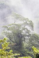 Mist Over A Rainforest, Republic Of Costa Rica
