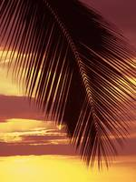 Hawaii, Silhouette Of Palm Frond Against Orange Su