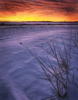 A Golden Winter Sunrise Over Drifted Snow, Alberta