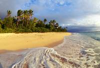 Fiji, Waves Washing Onto Tropical Beach, Palm Tree