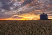 Sunrise Over A Barley Field And Grain Silo On A Fa