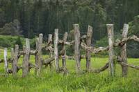 Hawaii, Lanai, Wooden Fence Bordering Pasture As L