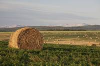 Hay Bales In A Field With Mountains In The Backgro