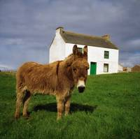 Cottage And Donkey, Tory Island