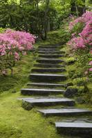 Rock Stairway Along A Moss Covered Hill Portland,