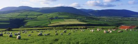 Pastoral Scene Near Anascual, Dingle Peninsula, Co