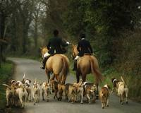 The Bray Harriers, County Wicklow, Ireland