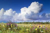 Towering Cumulus Clouds gather over meadow of wild