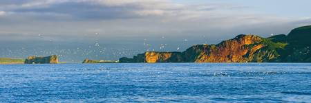 Gannets In Flight And Perce Rock From Barachois, G