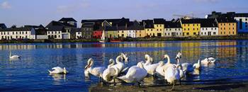 Quay With Swans, Galway City, County Galway, Irela