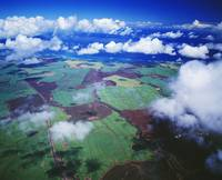 Hawaii, Maui, Aerial View Of Sugarcane Fields In C