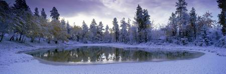 Pond And Fresh Snowfall, Near 70 Mile House, Briti