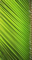 Graphic Detail Of Coconut Palm Leaf