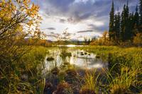 Yukon River And Fall Colours At Sunset, Yukon, Can