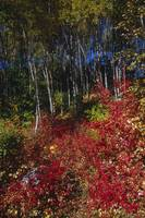 View of the Fall foliage near Bird Creek along the