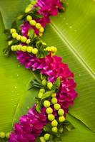 Hawaii, Oahu, Orchid Lei On Banana Leaves