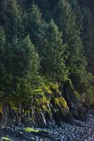 Spruce Tree forest, Chiniak Bay, Kodiak Island, So