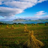 Hay Bales In A Field, Ireland