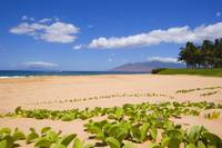 Hawaii, Maui, Kihei, Keawakapu Beach, Green Leafy