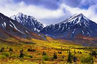 Fall Colours And Auriol Range, Kluane National Par