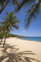 Hawaii, Lanai, Hulopoe Beach, Palm Trees And Shado