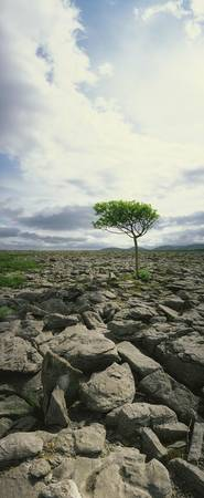 The Burren, On Kinvara Side, County Clare, Ireland