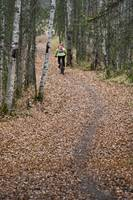 Woman Mountain Biking On A Leaf Covered Trail, Anc