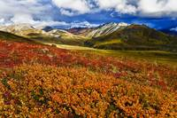 Scenic Autumn View Of Colorful Tundra At Thorofare