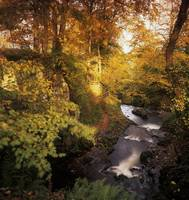 Flowing Water Through A Forest, Glenarm, County An