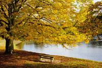 A Large Tree And Bench Along The Water In Autumn