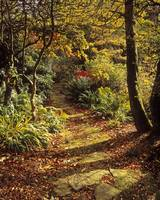 Woodland Path, Mount Stewart, Ards Peninsula, Coun
