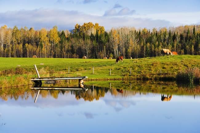 Stunning cantons de l 39 est artwork for sale on fine art for Pond companies near me