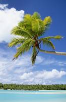 Palm Tree And Beach, Aitutaki, Cook Islands