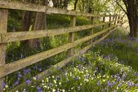 A Wooden Fence With Blue And White Wildflowers No