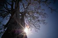 The Sunlight Shines Behind A Tree Trunk Kenya, Af