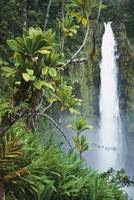 Hawaii, Big Island, Akaka Falls Surounded By Ti-Le
